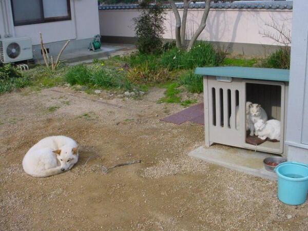 失った犬と奪った猫6