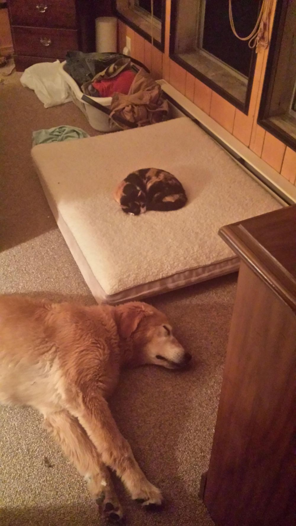 失った犬と奪った猫8