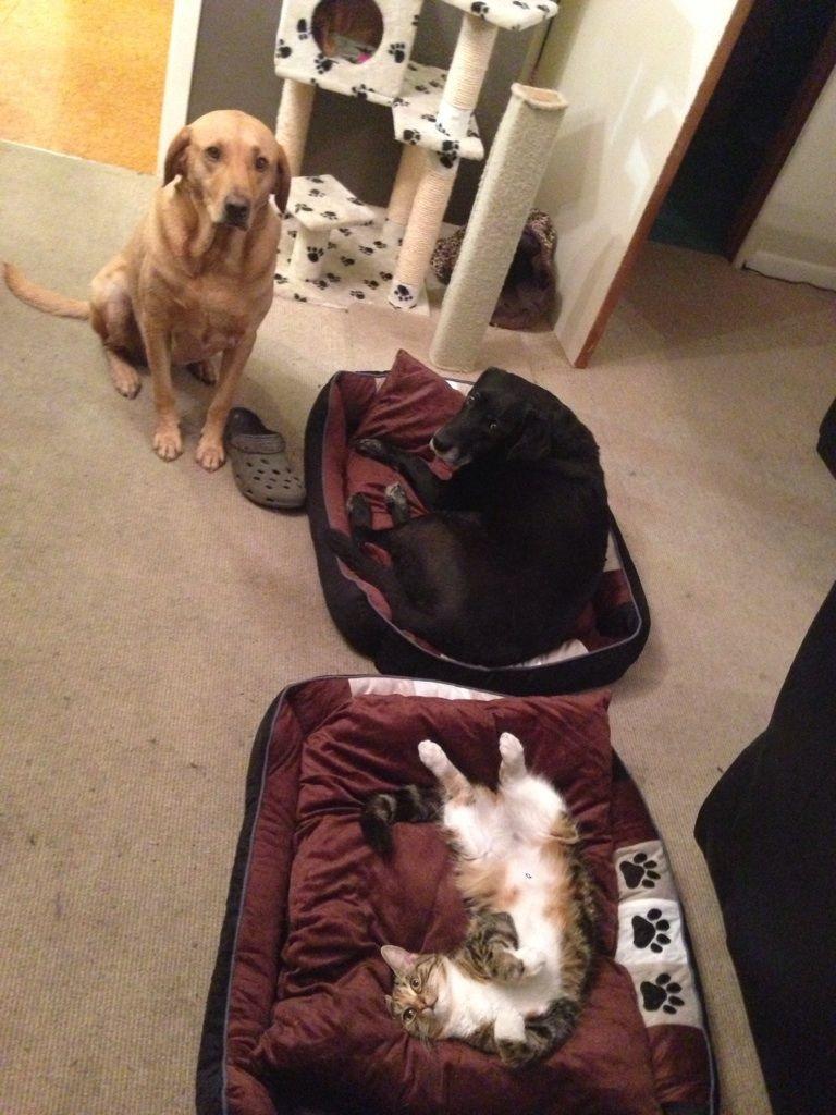 失った犬と奪った猫9