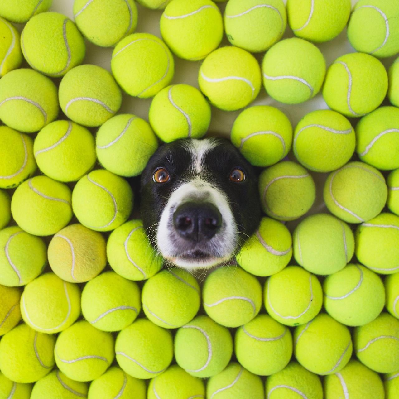 犬 ワンコを探す画像:これはすご...